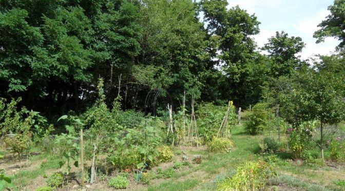 Garten im August 2019