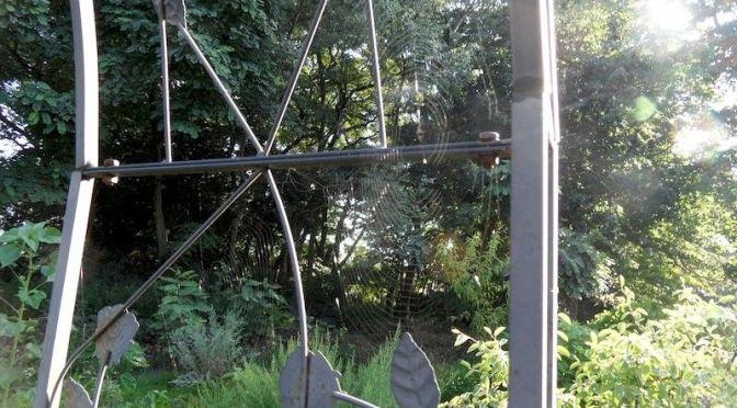 """Spinnennetz im Morgenlicht Beet """"Bärli"""" 18.07.20"""