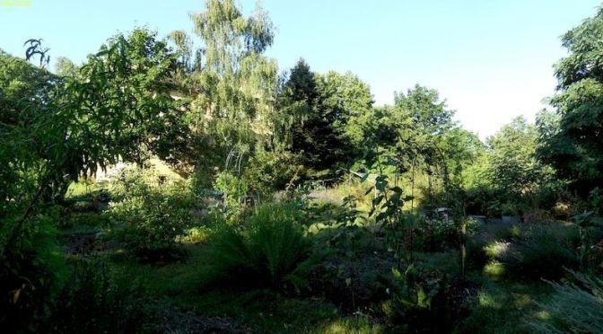 Garten am Morgen 27.7.20