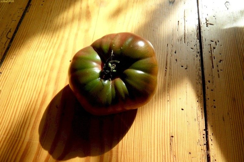 "Tomate ""Black Krim"" geerntet im Spätsommer September 2017"
