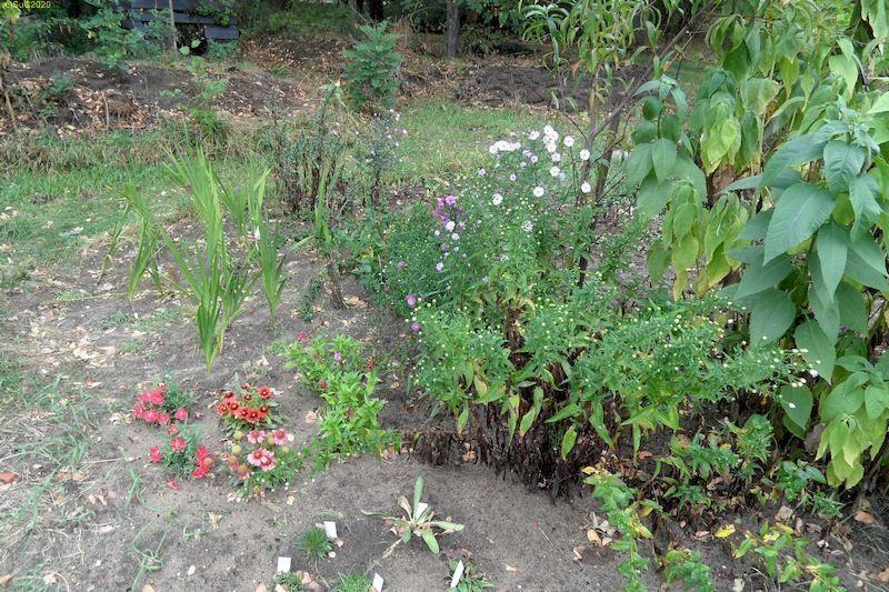 """Blumen im Beet """"Mangold"""" 25.9.20"""