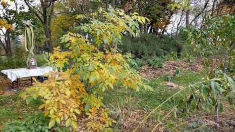"""Walnussbaum Beet """"Erwin"""" Oktober 2020"""