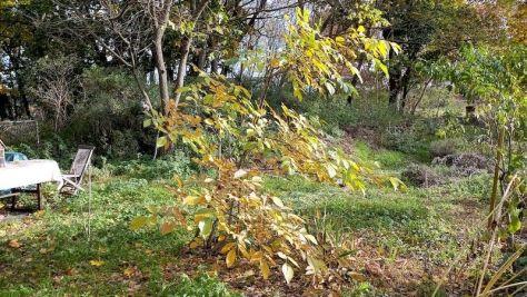 """Erwin, der Walnussbaum Beet """"Erwin"""" Oktober 2020"""