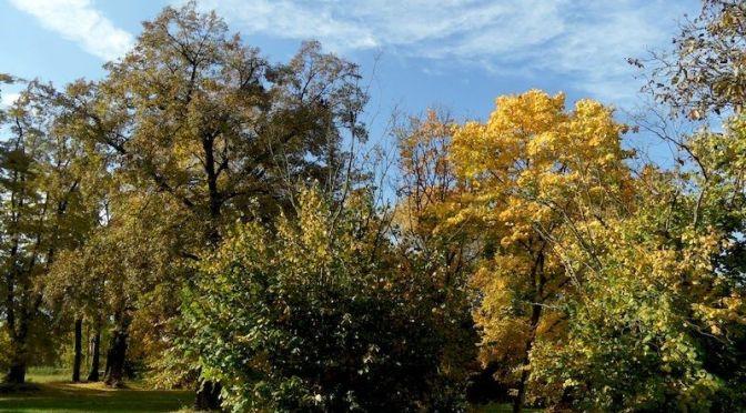 Blick von der Terrasse nach Südwesten Oktober 2013