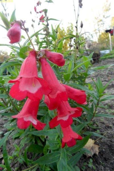 Rote Blüten 44. Kalenderwoche 2014
