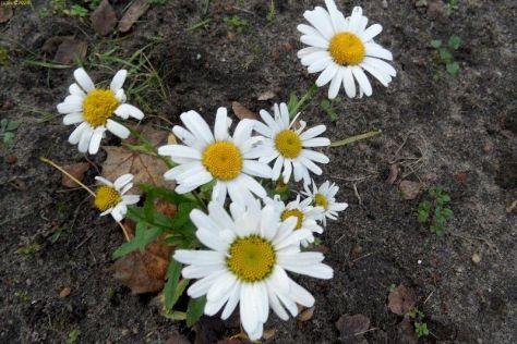 Weiße Blüten 44. Kalenderwoche 2014
