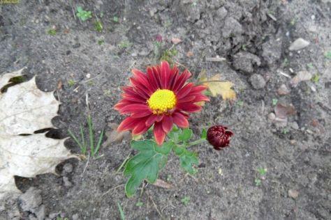 Rote Blüten im November 2014