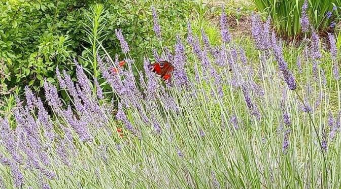 Schmetterlinge und anderes
