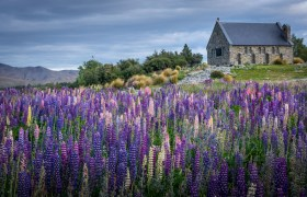 New Zealand: Lake Tekapo and Mount Cook