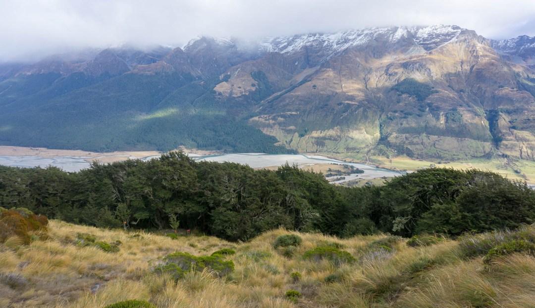 Treeline on Mount Alfred