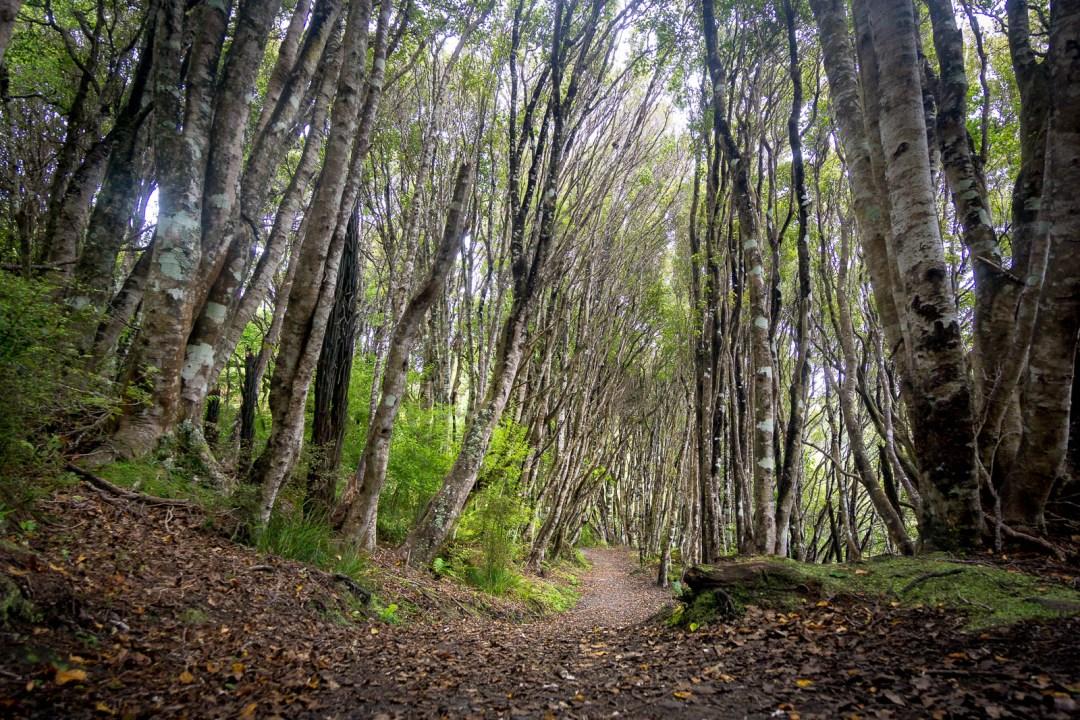 Trail along Rakiura Great Walk