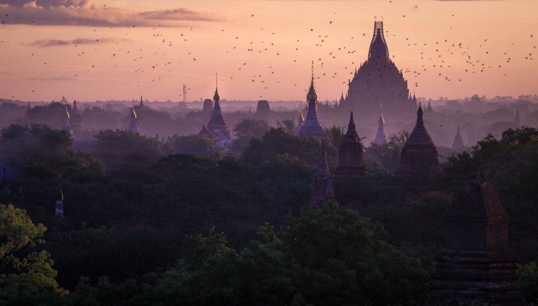 Birds flying over peaks of temple and pagodas in Bagan