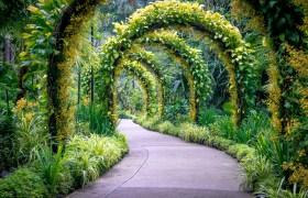 POW: Golden Arches in Singapore's Botanic Gardens