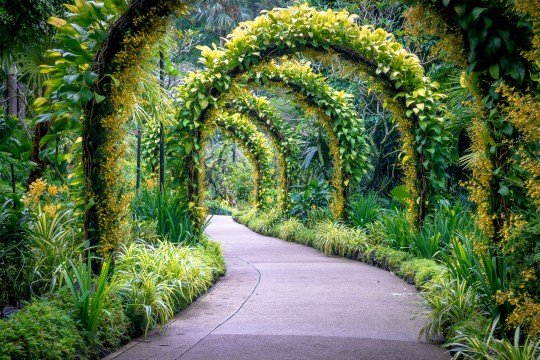 Image result for Singapore Botanic Gardens