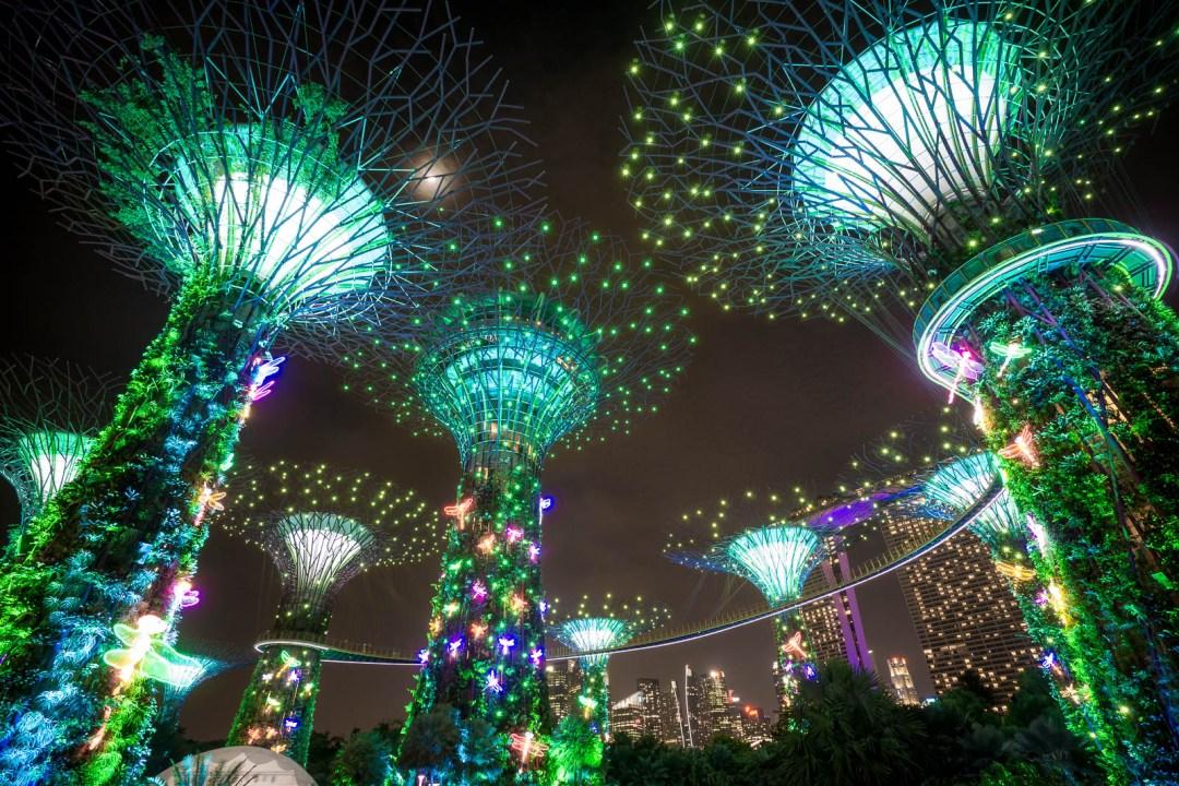 Super Tree Grove During Light Show