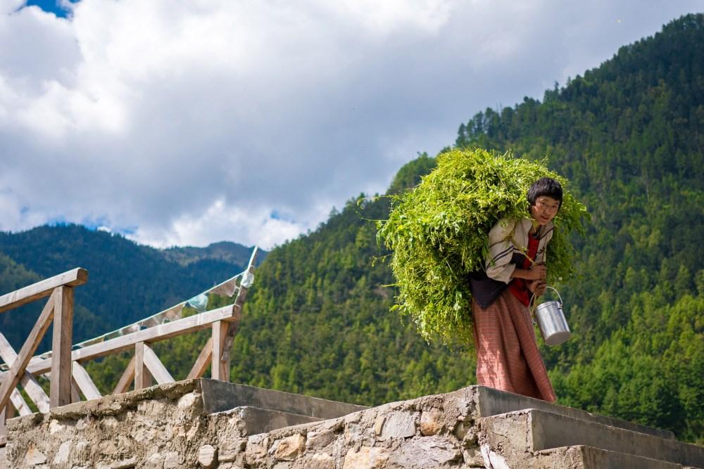 Women Carrying Grass For Cattle