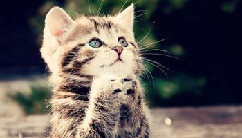 4 Tips for Finding Awesome Cute Cat Names