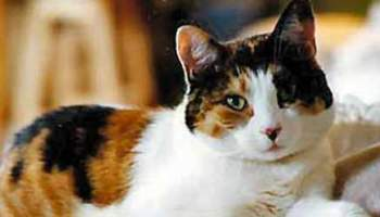 133 Cool Cat Names Easy Tips To Find More Awesome Names