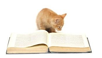 Mythical Cat Names - Creative Names from Mythology