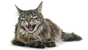 75 tough boy cat names find cat names