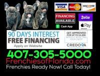 FRENCHIESOFFLORIDA.COM CREDOVE 90 DAY PROMO.2.jpg