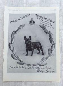 French Bulldog History