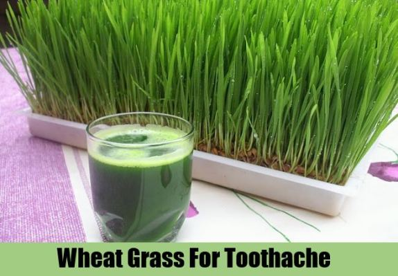 Wheatgrass Juice For Toothaches