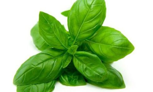 Basil Leaves For Fever