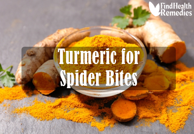 turmeric-for-spider-bites