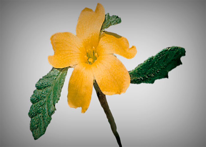 Damiana Essential Oil to Treats TB (Tuberculosis)