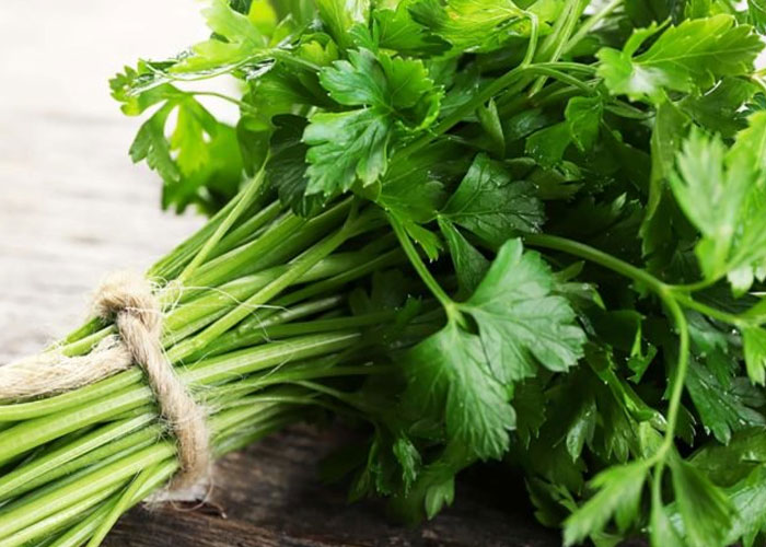 Parsley for Abortion