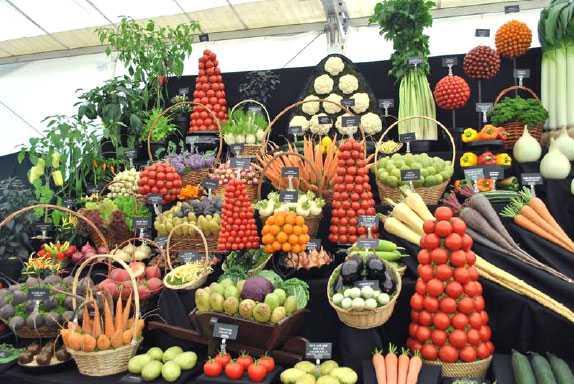 Health Benefits of Vegeaerian Diet