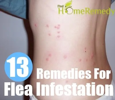 Flea Infestation