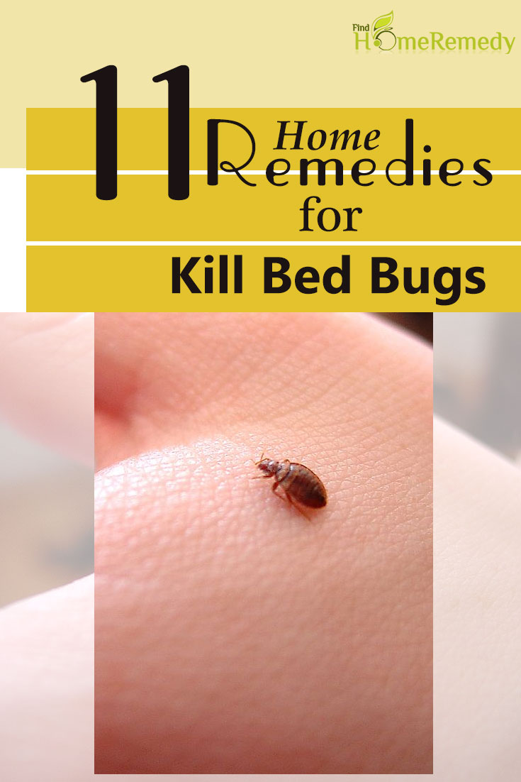 11 Home Remedies To Kill Bed Bugs Natural Treatments Cure For Bed Bugs Find Home Remedy Supplements