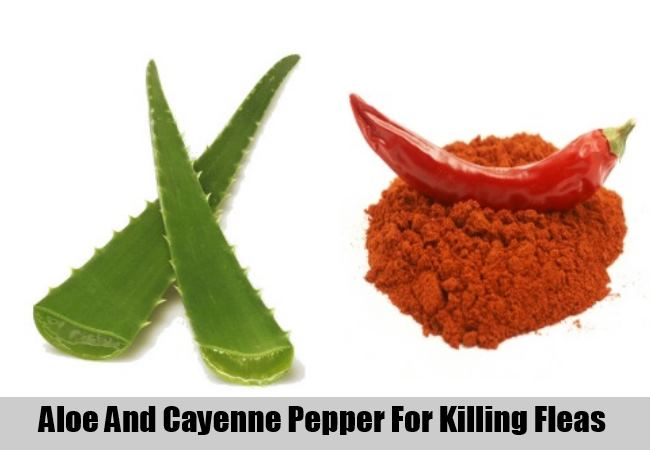 Aloe Juice And Cayenne Pepper