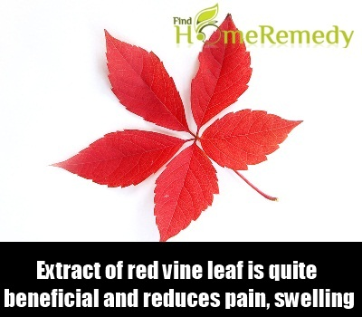 Red Vine Leaf