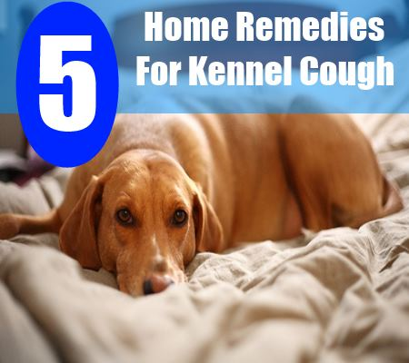 5 Home Remedies For Kennel Cough Natural Treatments Cure For