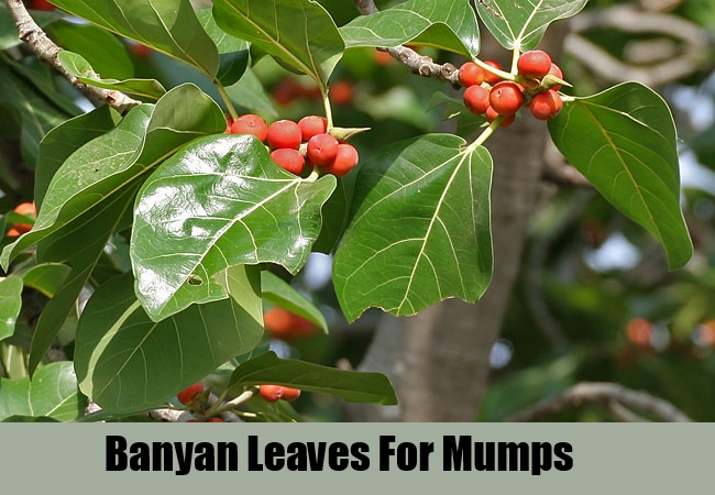 Banyan Leaves