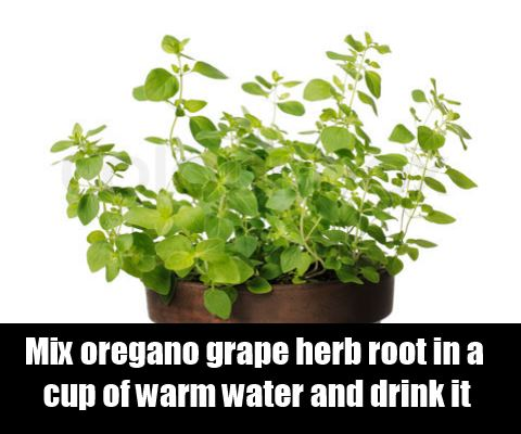 Oregano Grape