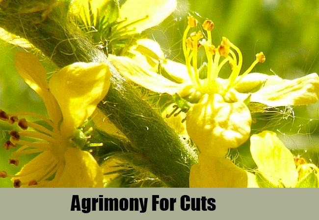 Image result for Agrimony for wound healing