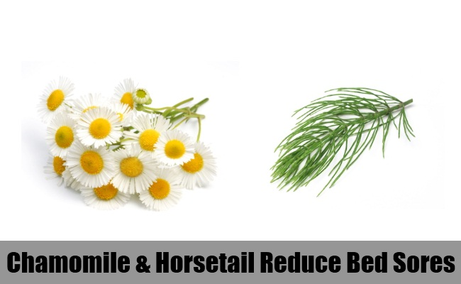 Chamomile And Horsetail