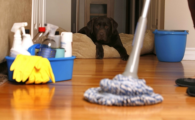 Keeping Your Surroundings And Belongings Clean