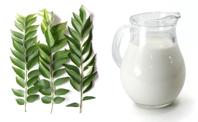 Curry leaves and Buttermilk