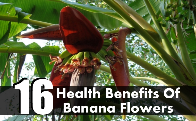 Health Benefits Of Banana Flowers