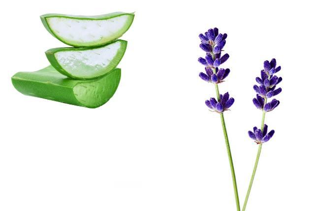 Aloe Vera Gel And Lavender