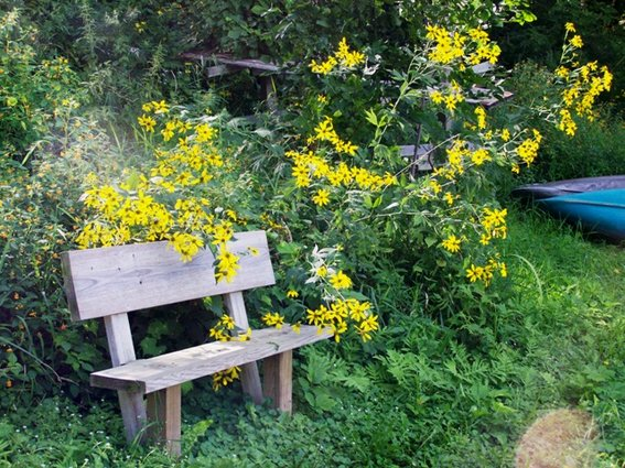Bench near the St. Croix River