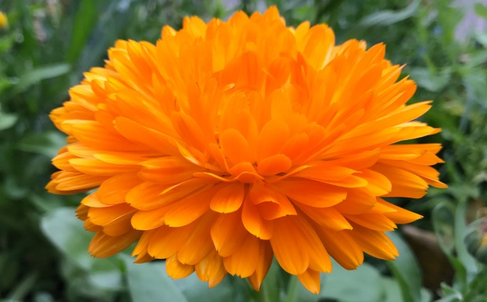 Bright orange flower