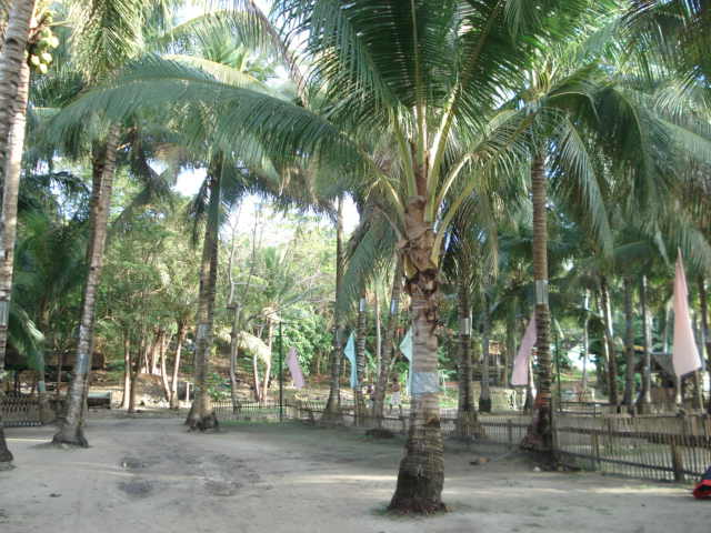panglao beach resort