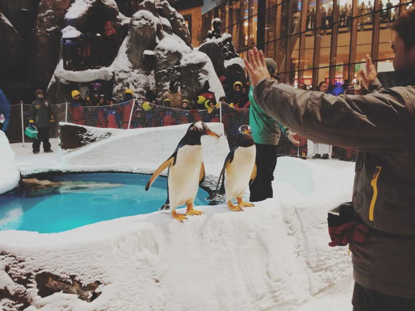Cute-penguins-at-Ski-Dubai