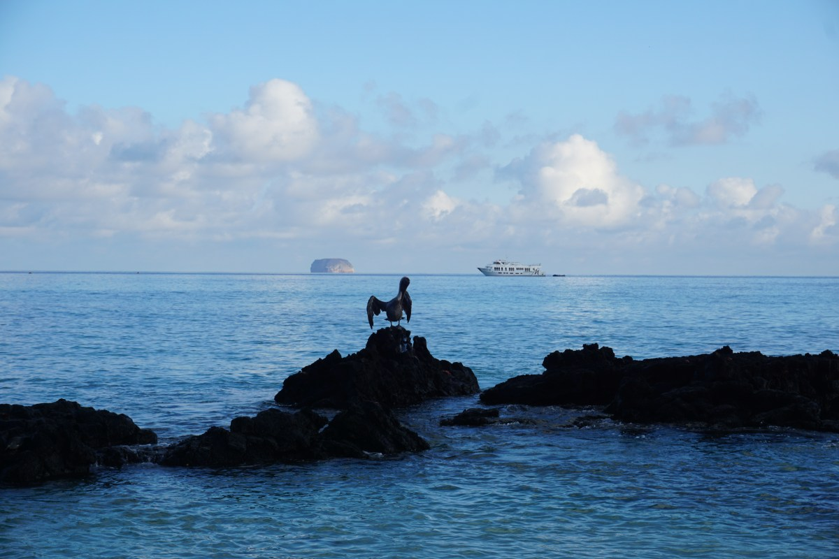Your Guide To The Galapagos